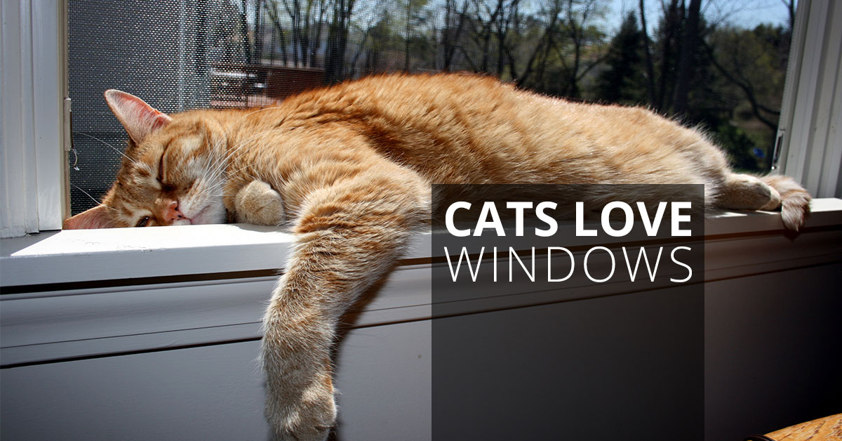 The Problem With Cats And Window Treatments